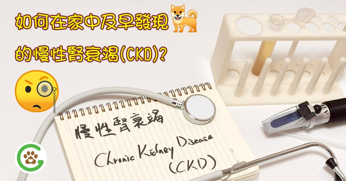 如何在家中及早發現狗狗的慢性腎衰竭 (CKD)?