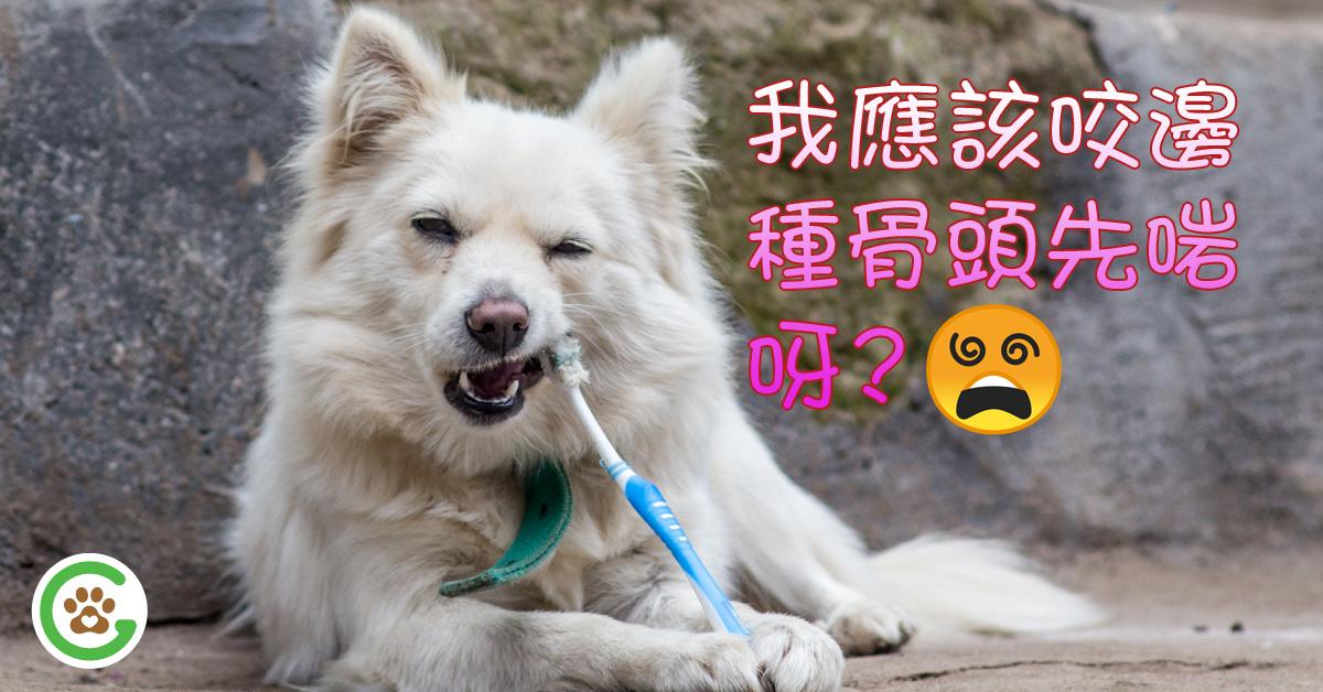 狗狗咬骨頭應注意事項